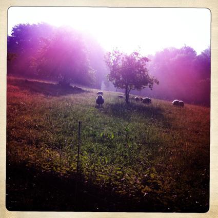 Guten Morgen, liebe Herde