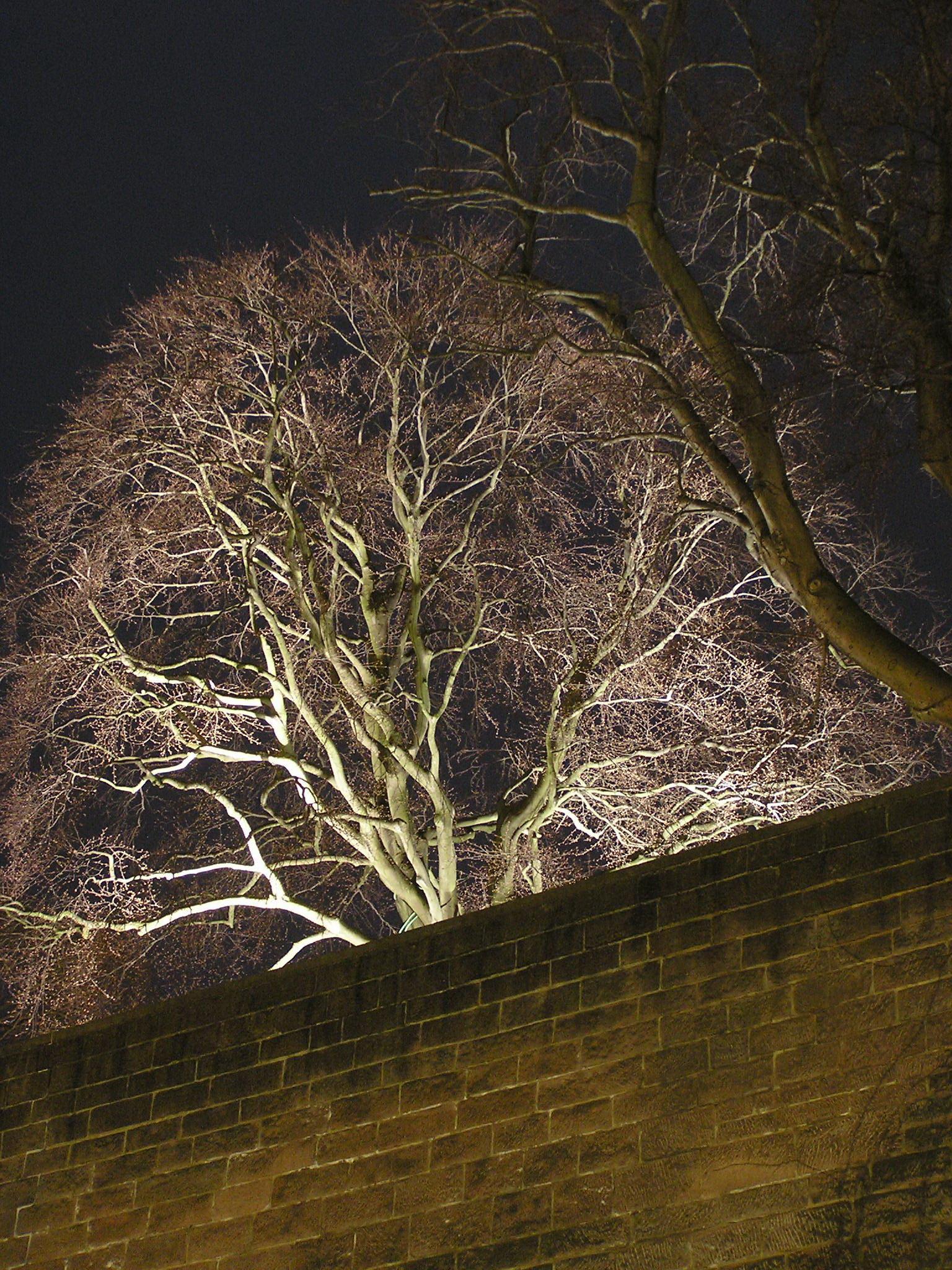Nachtbild 002: Baum