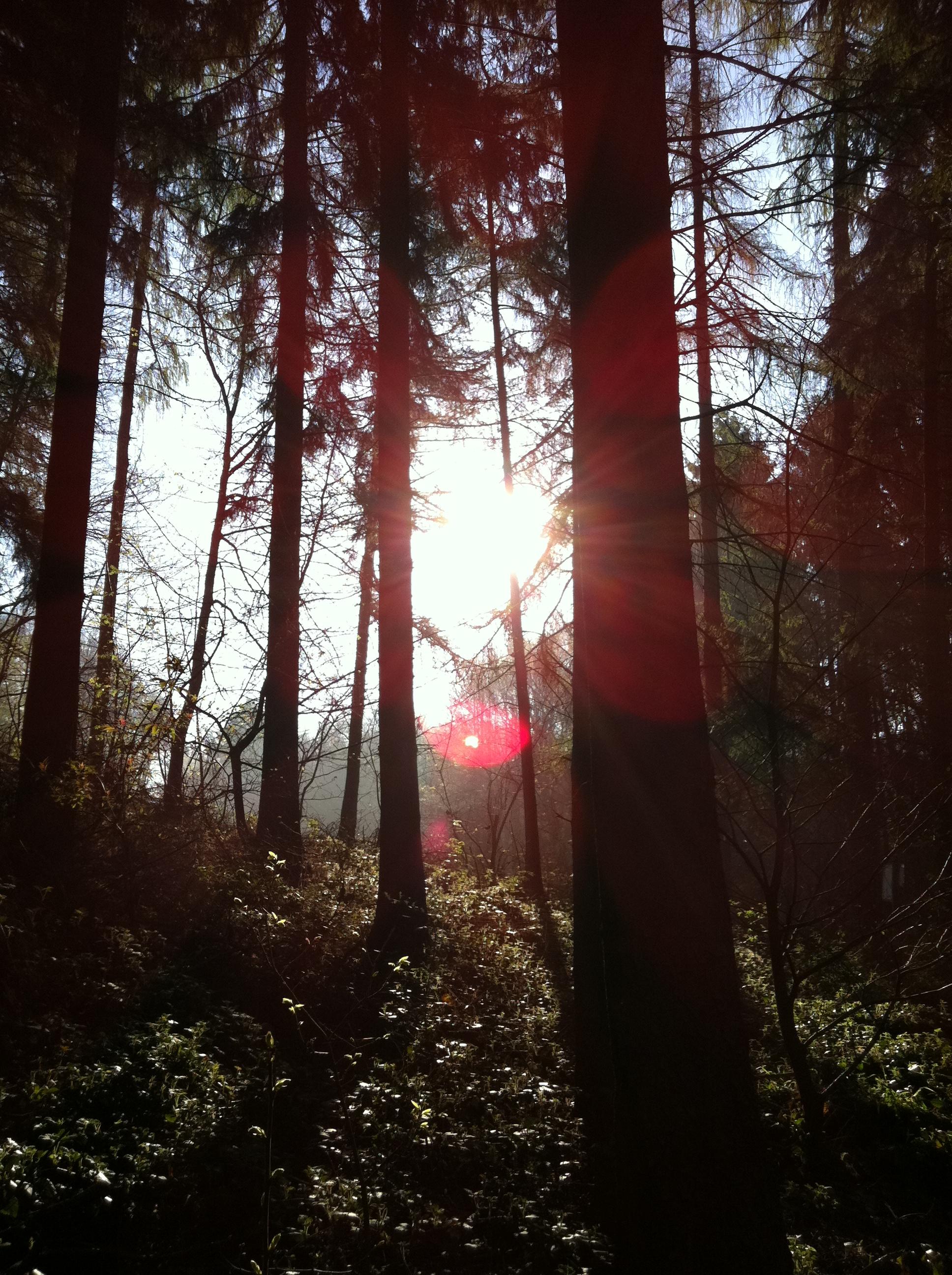 Morgens im Urwald
